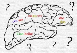 cerebro aprendizado idiomas
